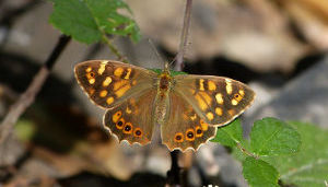 Things to do - Edinburgh Butterfly & Insect World